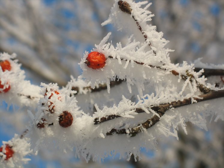 """Konkurs fotograficzny """"Zima w obiektywie"""""""